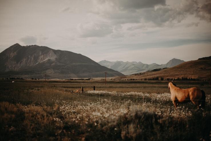 CattlemensQueen_KiKiCreates-031