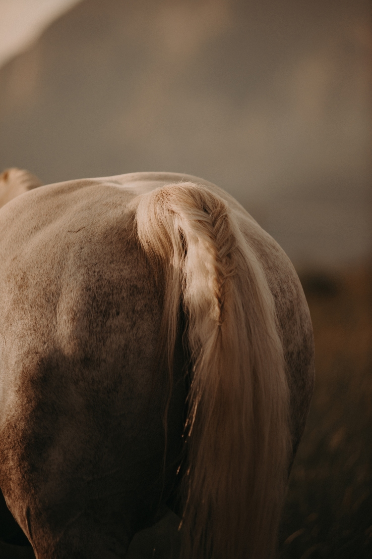 CattlemensQueen_KiKiCreates-066